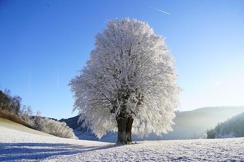 tree-1959267_960_720.jpg