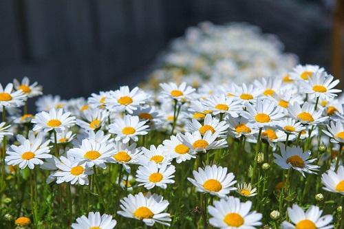 flowers-3307436_960_720.jpg