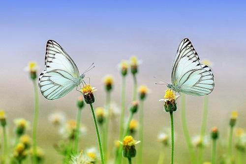 butterfly-1127666_960_720.jpg