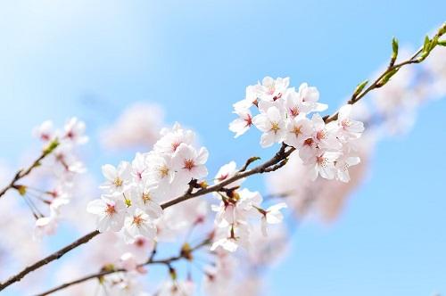 spring-2218771_960_720.jpg