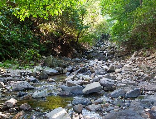 the-creek-3679864_960_720.jpg