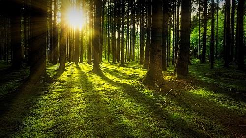 nature-3294681_960_720.jpg